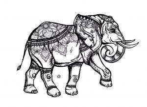 Coloriage elephant elegant