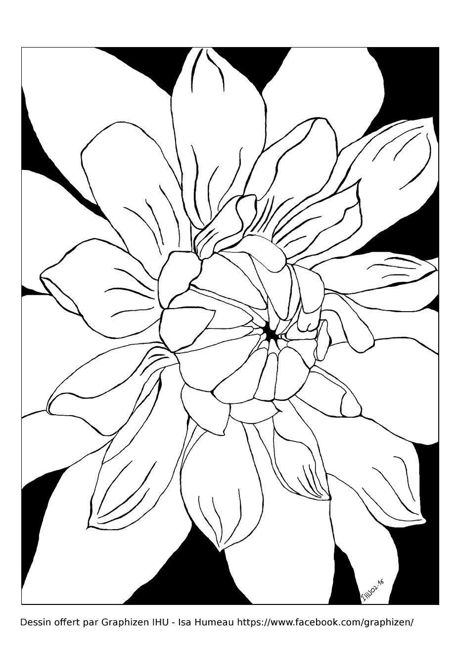 Fleur magnifique petales fleurs et v g tation coloriages difficiles pour adultes - Coloriage magnifique ...