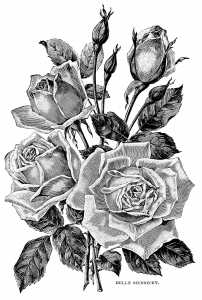 Coloriage adulte illustration vintage roses