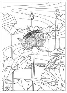 Coloriage adulte lotus par mizu