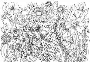 Jolies fleurs du Printemps
