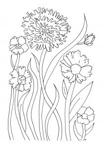 Coloriage simples fleurs