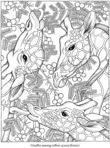 Coloriage adulte animaux testes girafes