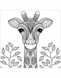 Coloriage tete de girafe et feuilles