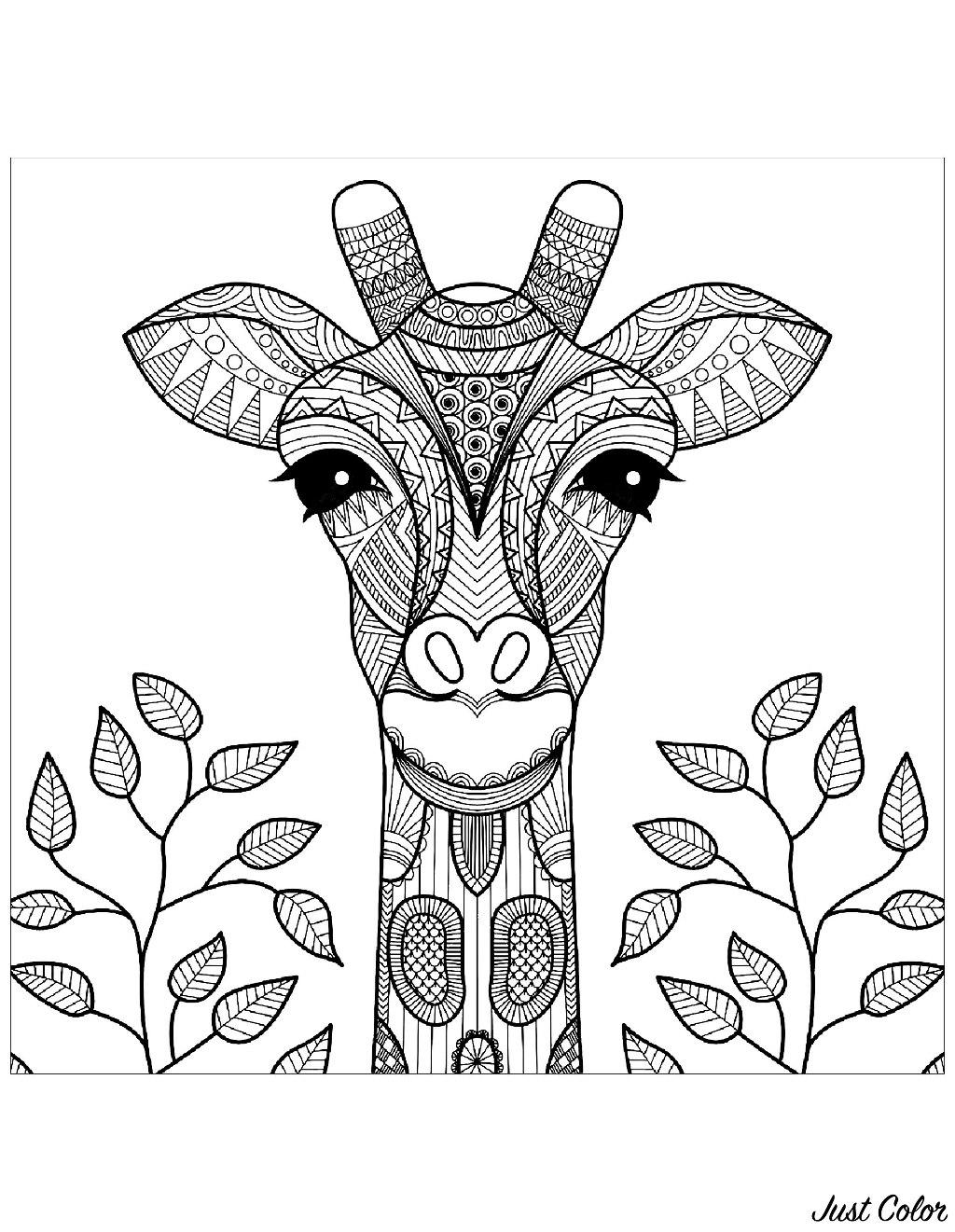 Tête de Girafe et feuilles