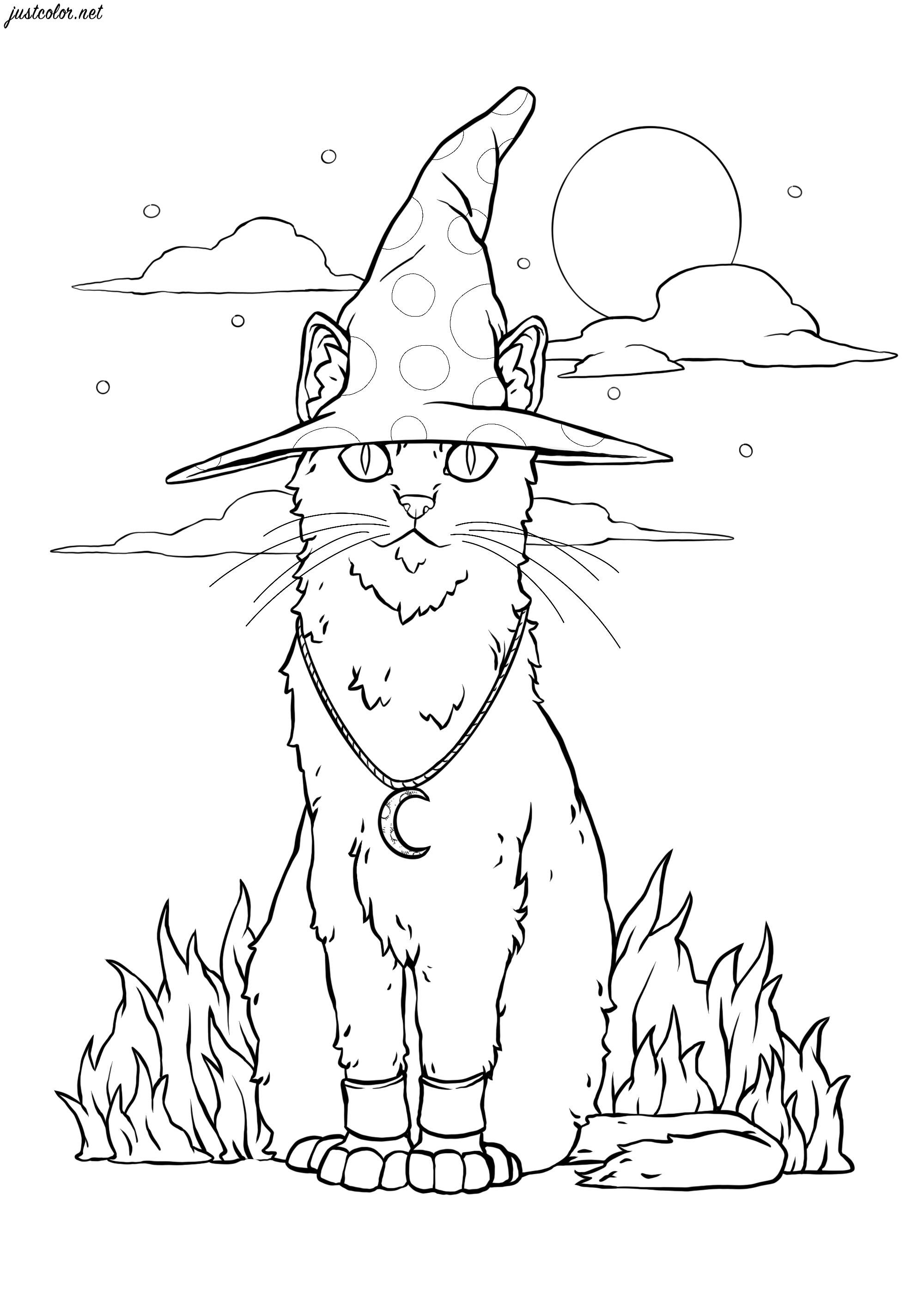 Un chat magique au clair de lune, où est sa sorcière ?