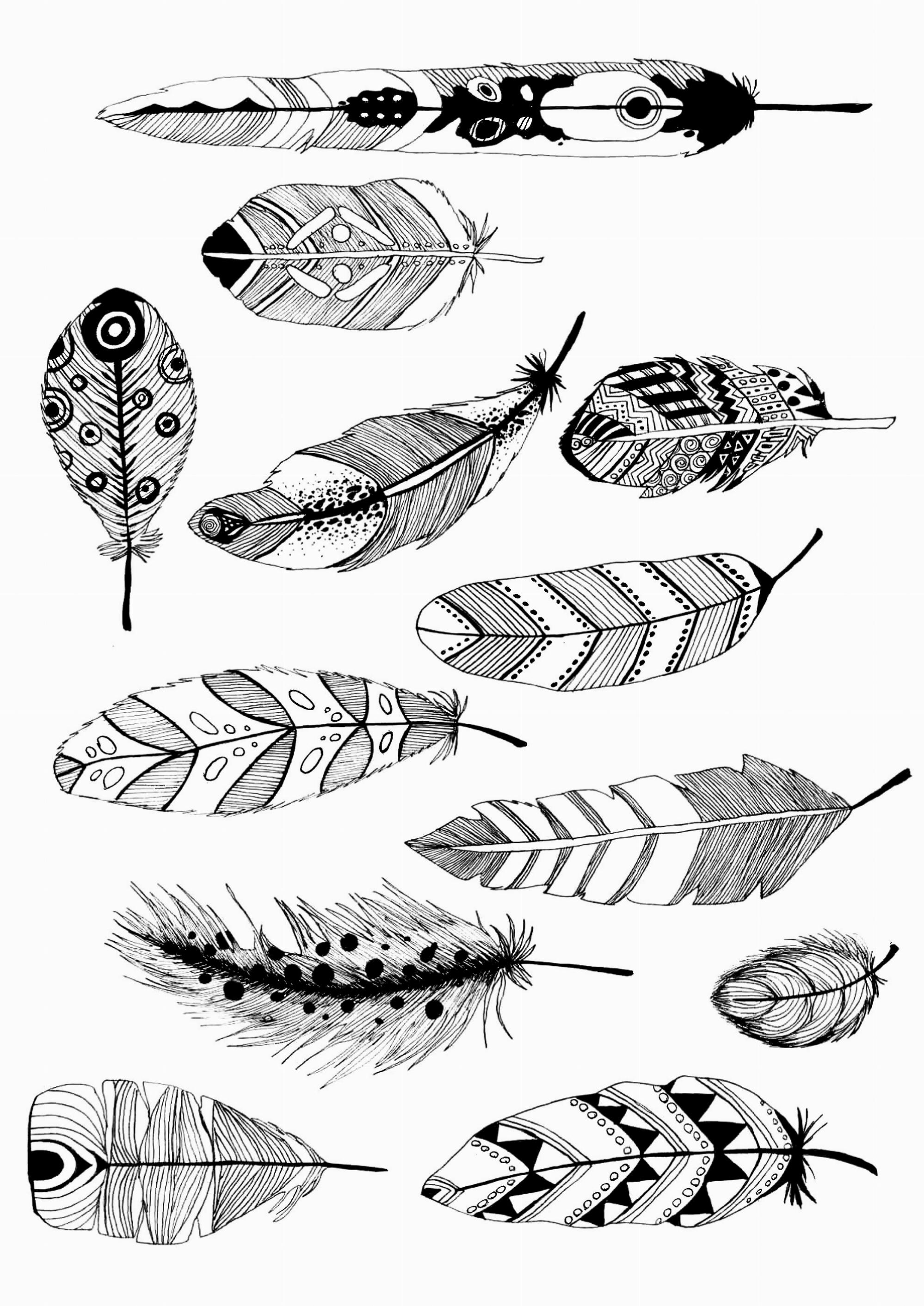 coloriage plumes par pauline free to print