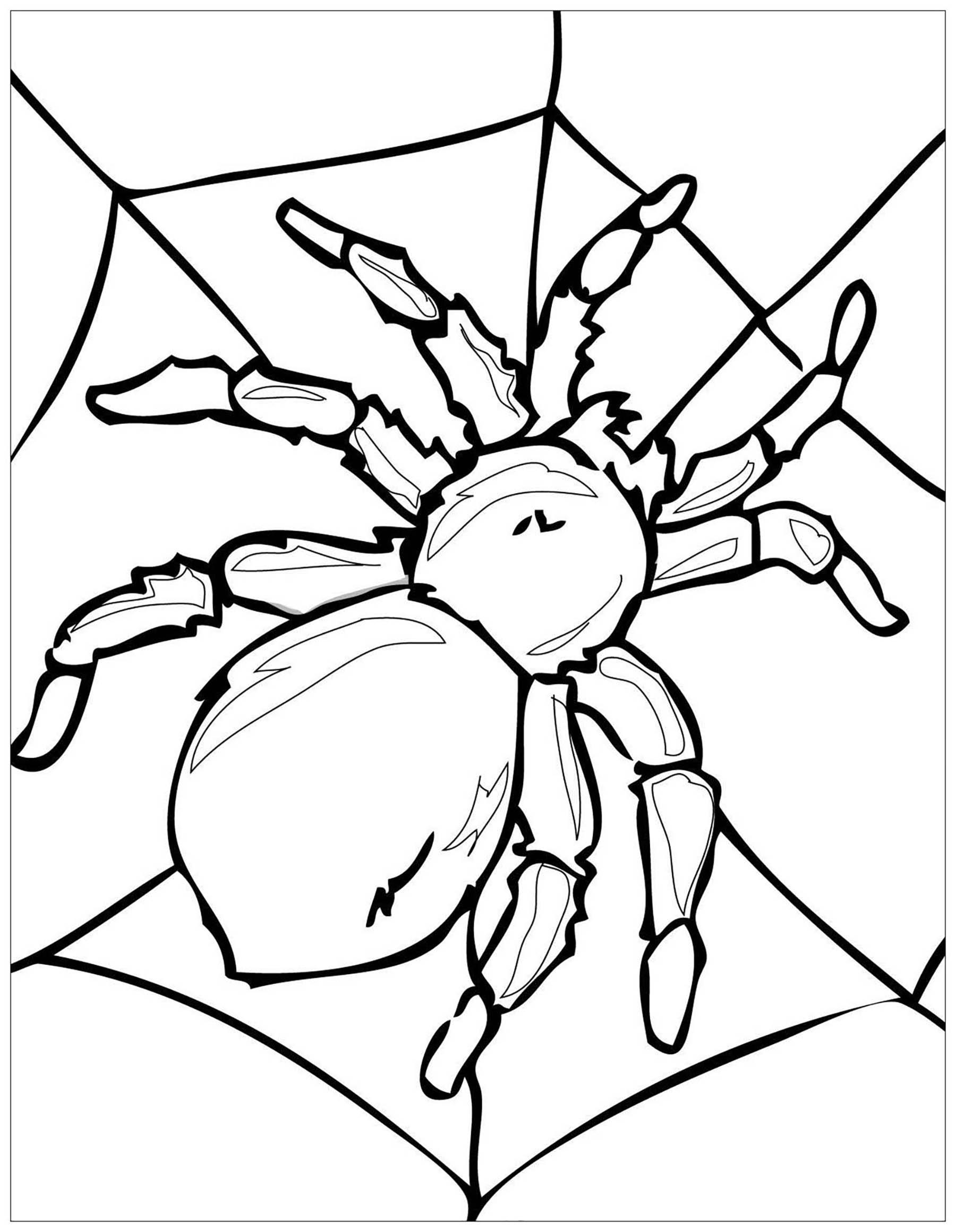 Coloriez cette grande araignée posée sur sa toile
