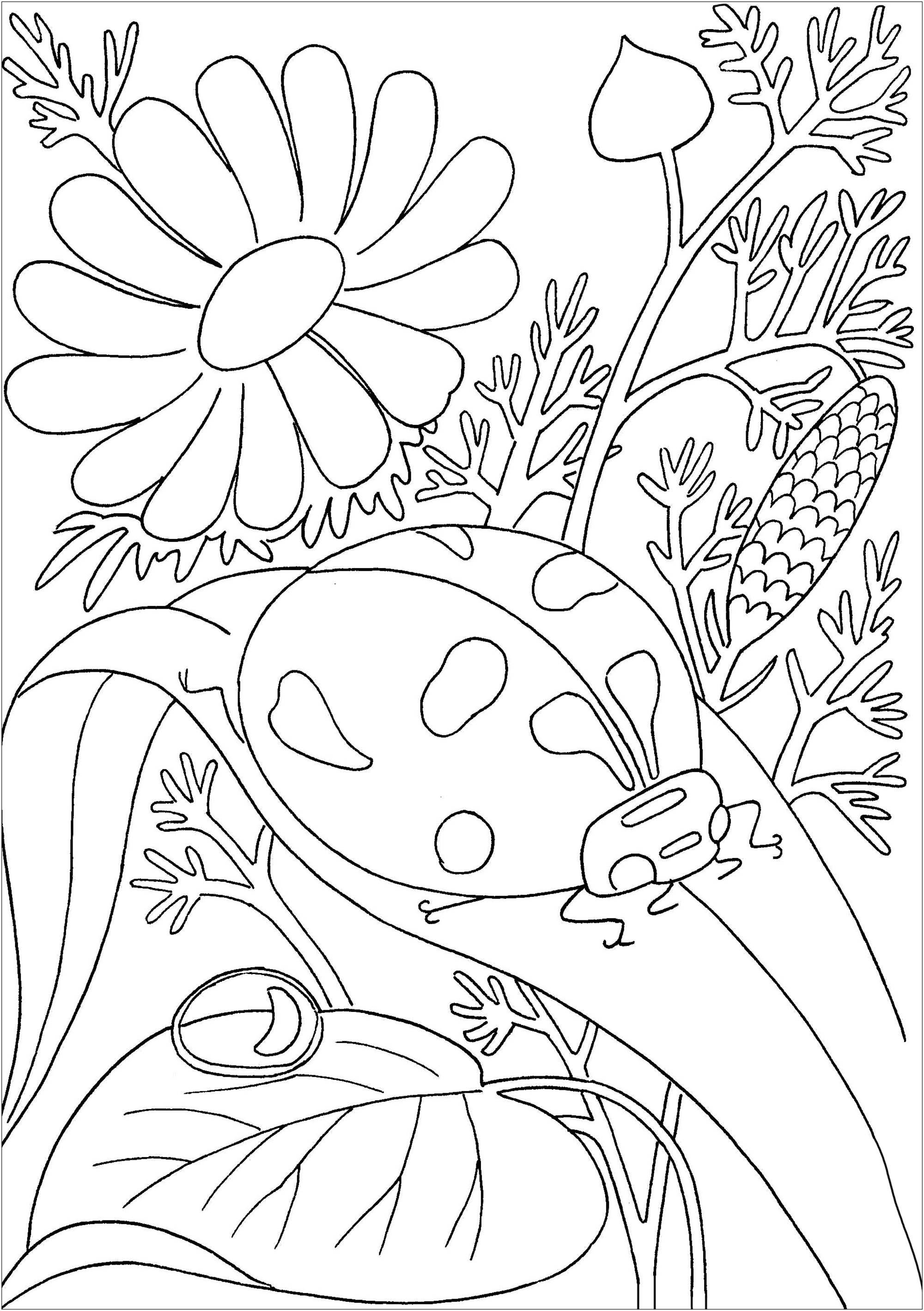 Jolie coccinelle dans une végétation variée et agréable