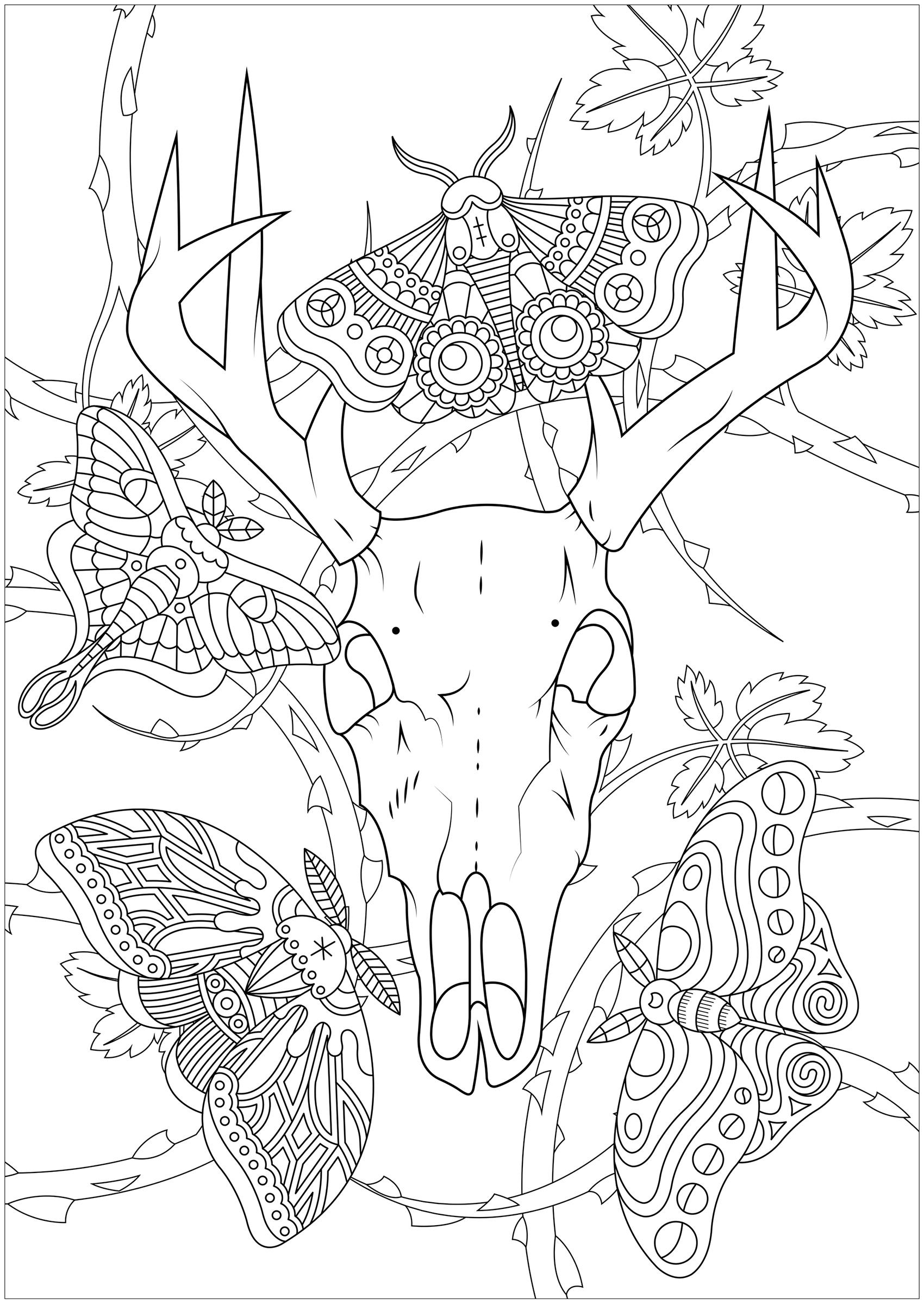 Quatre papillons de nuit et un crâne de cerf, avec des ronces en arrière plan ... Un coloriage lugubre et intriguant
