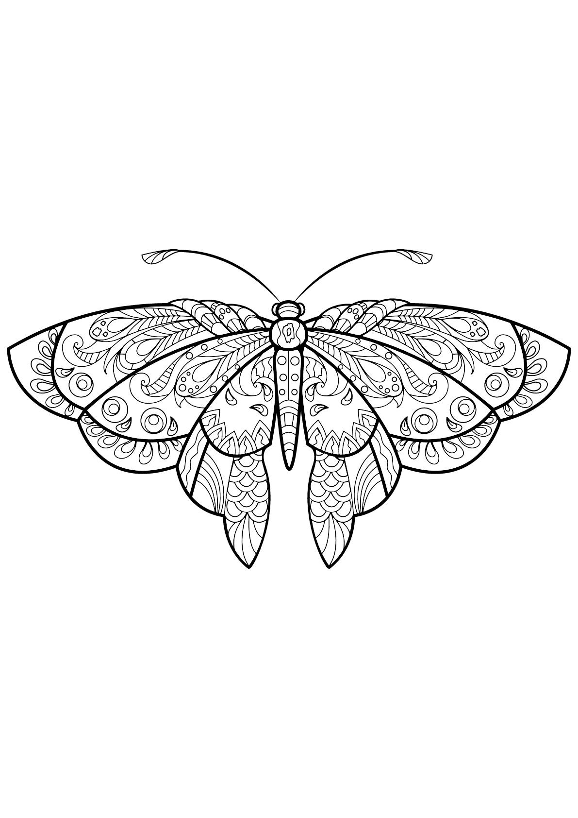 Coloriage d'un papillon avec des superbes motifs - 1
