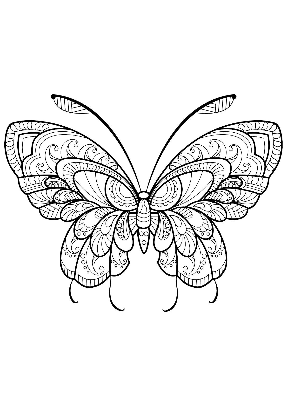 Papillon jolis motifs 11 papillons insectes coloriages difficiles pour adultes - Coloriage de papillon ...