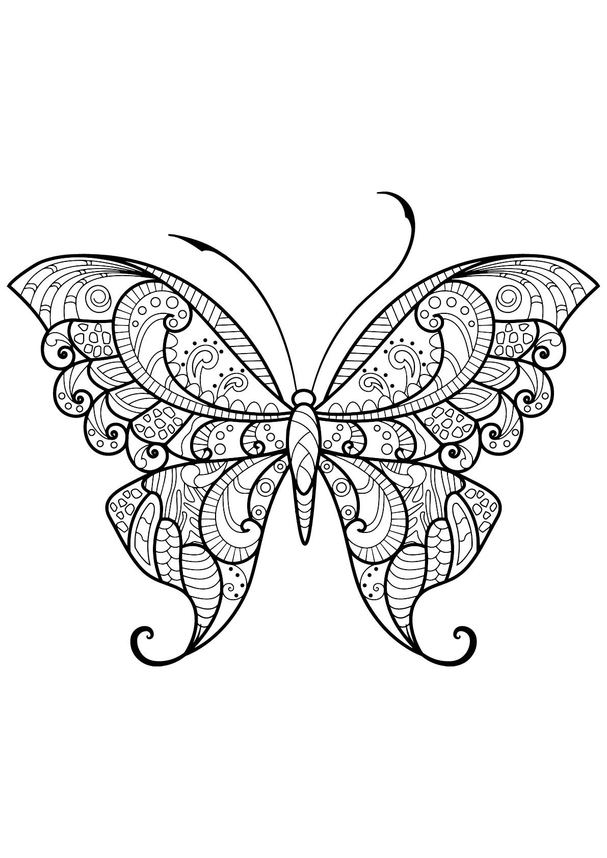 Papillon jolis motifs 12 papillons insectes coloriages difficiles pour adultes - Coloriage de papillon ...