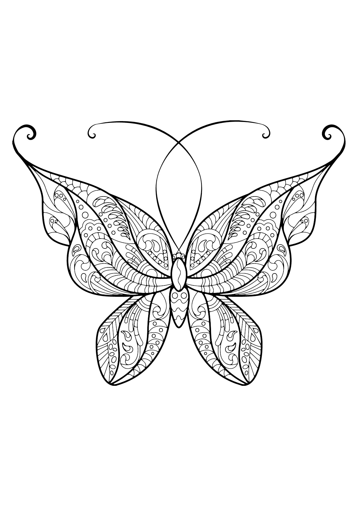 Papillon jolis motifs 14 papillons insectes coloriages difficiles pour adultes - Dessin d un papillon ...