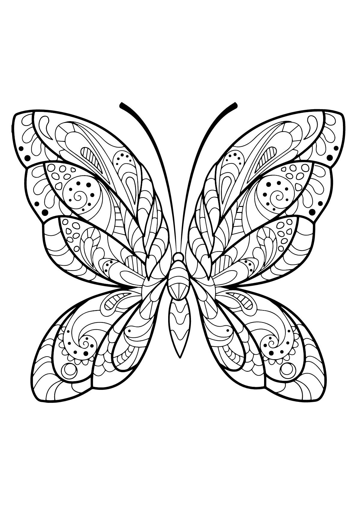 Papillon jolis motifs 2 papillons insectes coloriages difficiles pour adultes - Coloriage de papillon ...