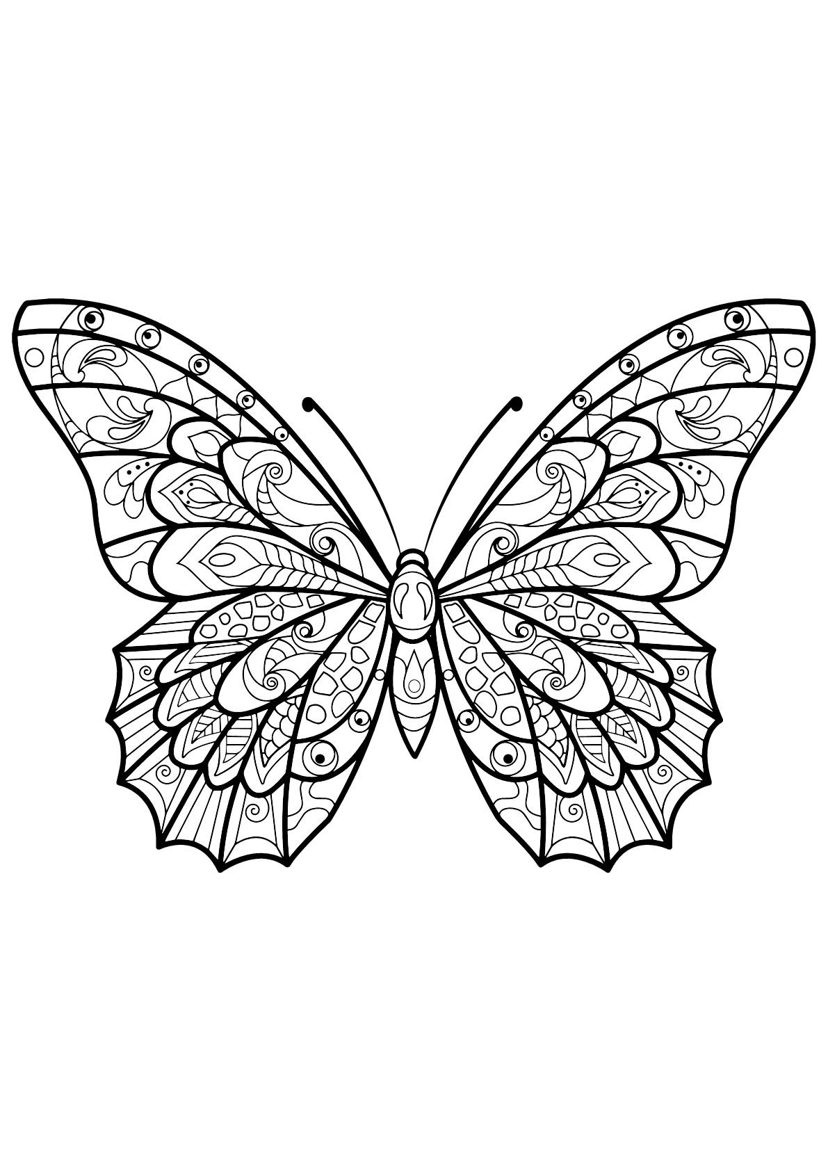 Coloriage d'un papillon avec des superbes motifs - 3