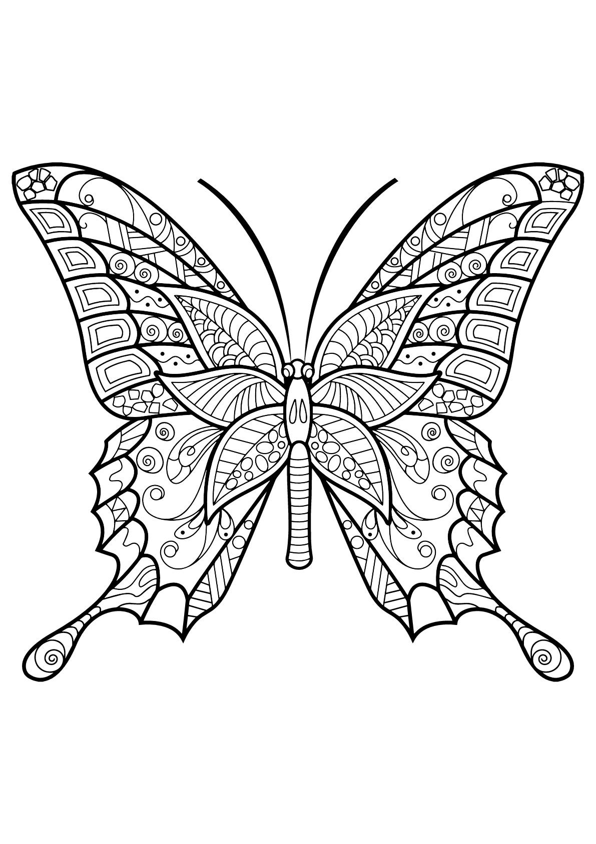 Coloriage d'un papillon avec des superbes motifs - 6