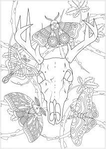Crâne de cerf et papillons de nuit