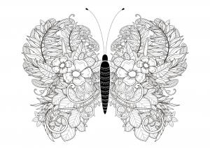 Papillon aux incroyables ailes