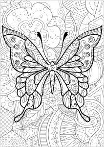 Papillon avec fond fleuri   4
