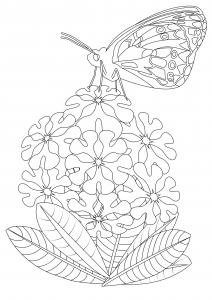 Coloriage papillon sur fleurs 2
