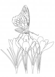 Coloriage papillon sur fleurs