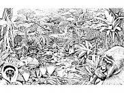 Coloriages Jungle et Forêt