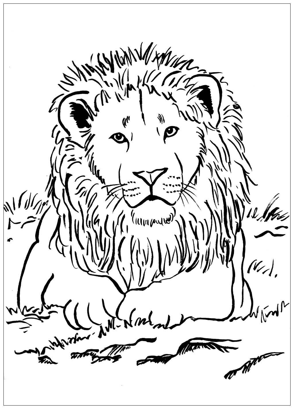 Lion Majestueux Lions Coloriages Difficiles Pour Adultes