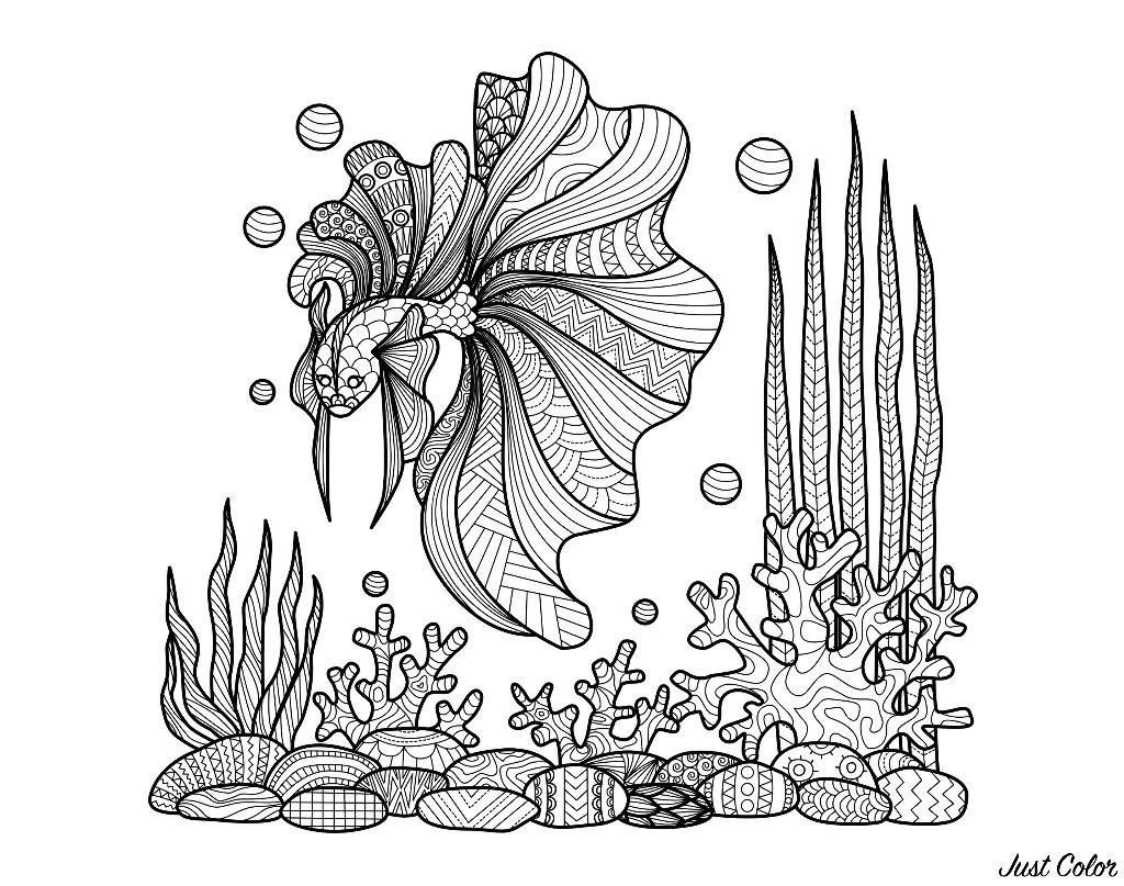 Dessin style Zentangle d'un poisson nageant au dessus de coraux, par Bimdeedee
