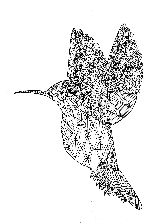 Colibri Oiseaux Coloriages Difficiles Pour Adultes
