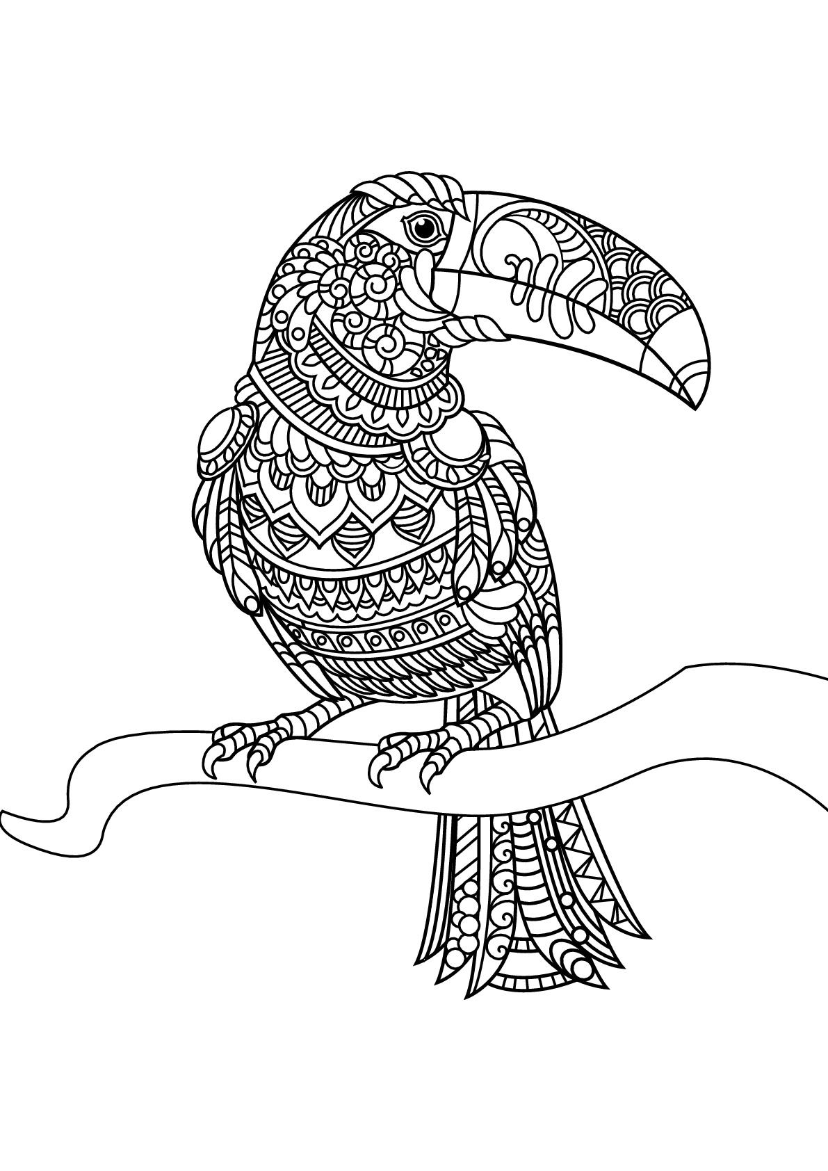 Livre gratuit toucan oiseaux coloriages difficiles pour adultes - Coloriage toucan a imprimer ...