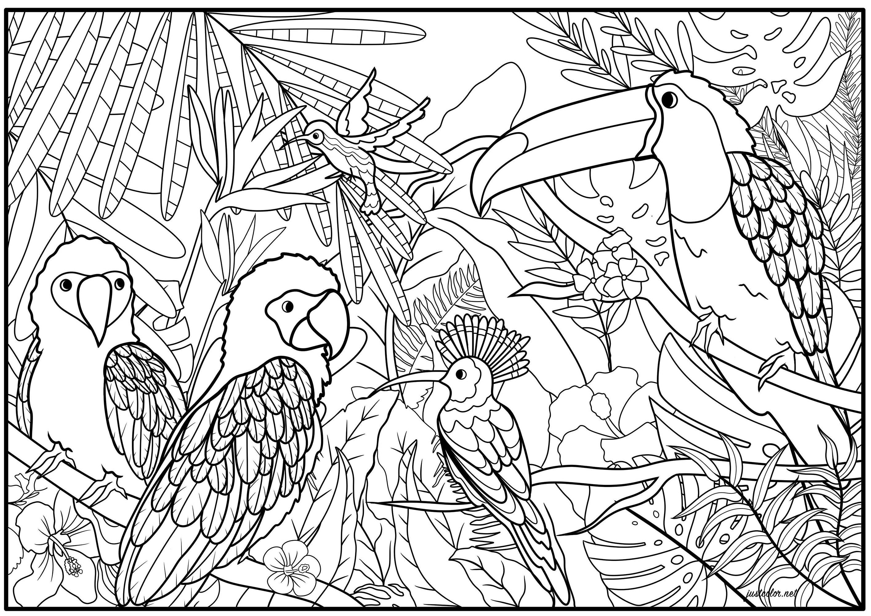 Ensemble de cinq oiseaux exotiques tel que des perroquets, un goura couronné, un colibri et un toucan, dans leur habitat naturel