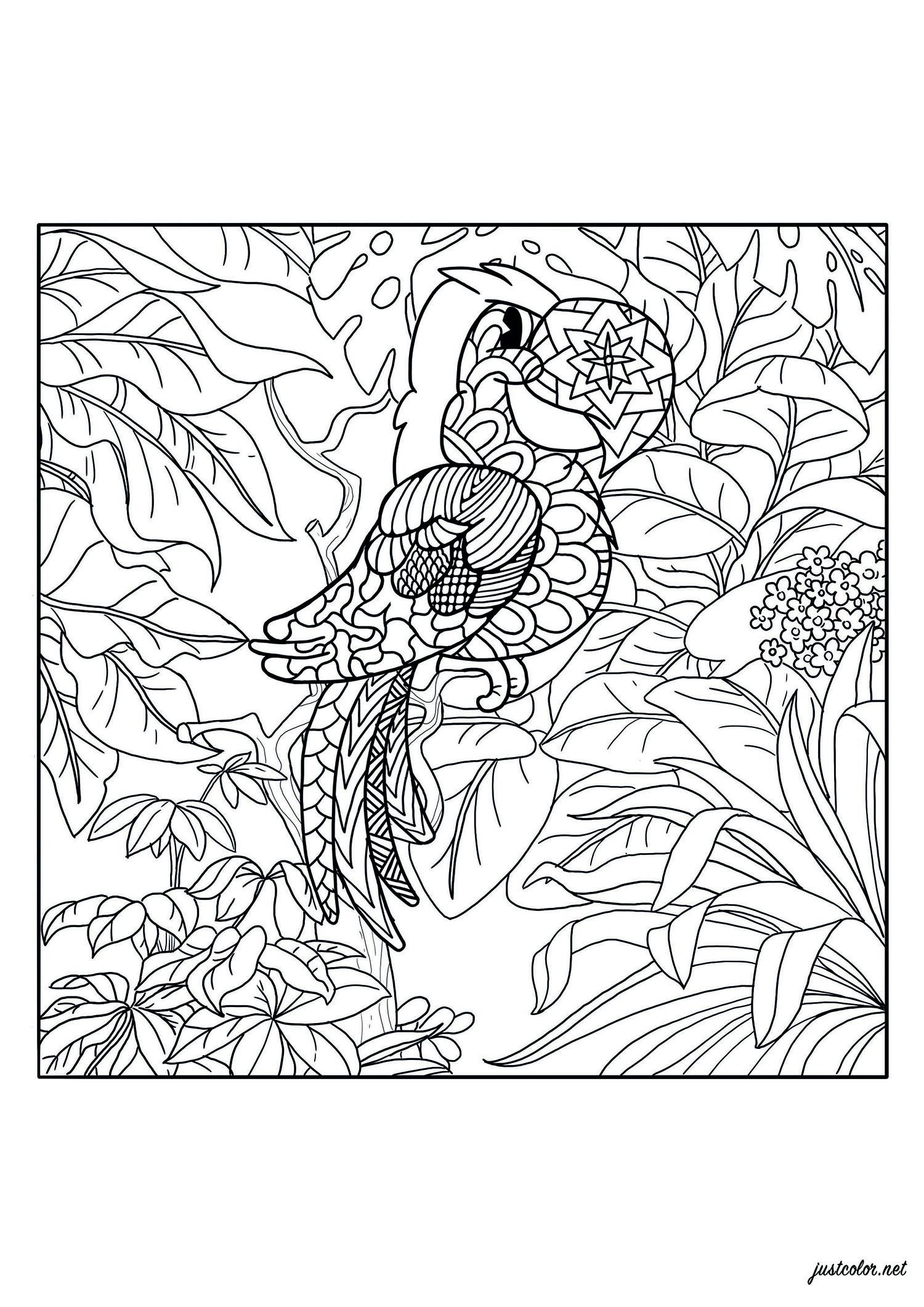 Un joli perroquet à colorier