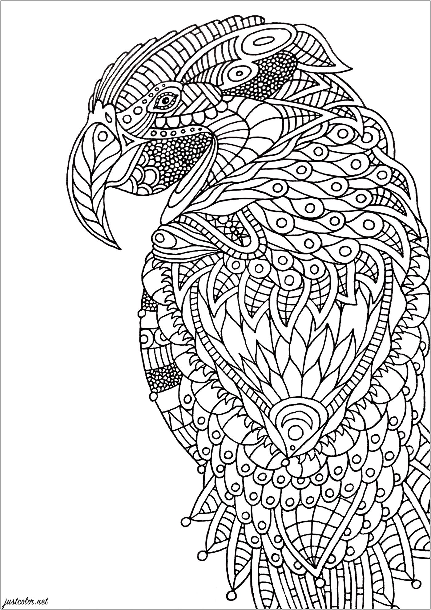 Coloriez les nombreux détails de ce perroquet aux motifs Zentangle ... un parfait coloriage Anti-stress.