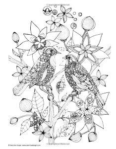 Coloriage adulte deux oiseaux sur une branche