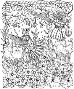 Colibris et fleurs