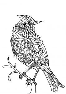 Coloriage livre gratuit oiseau