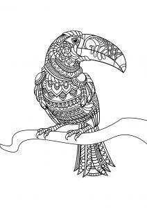 Coloriage livre gratuit toucan
