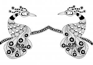 Coloriage deux oiseau extraordinaires