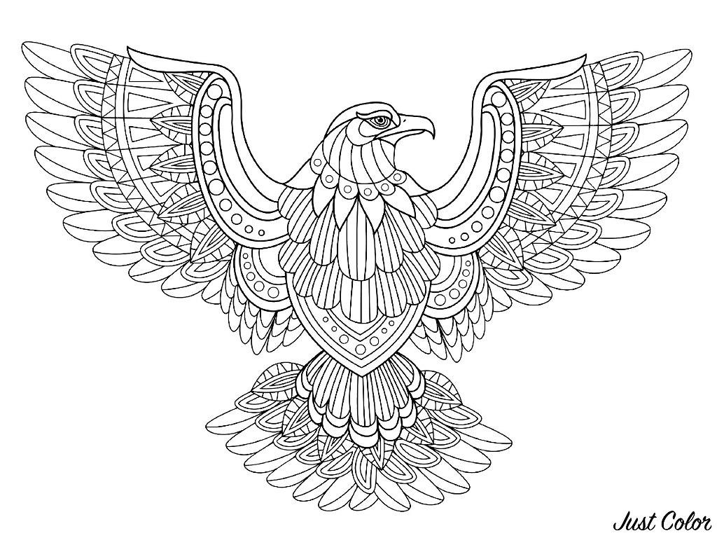 Un magnifique aigle en plein vol