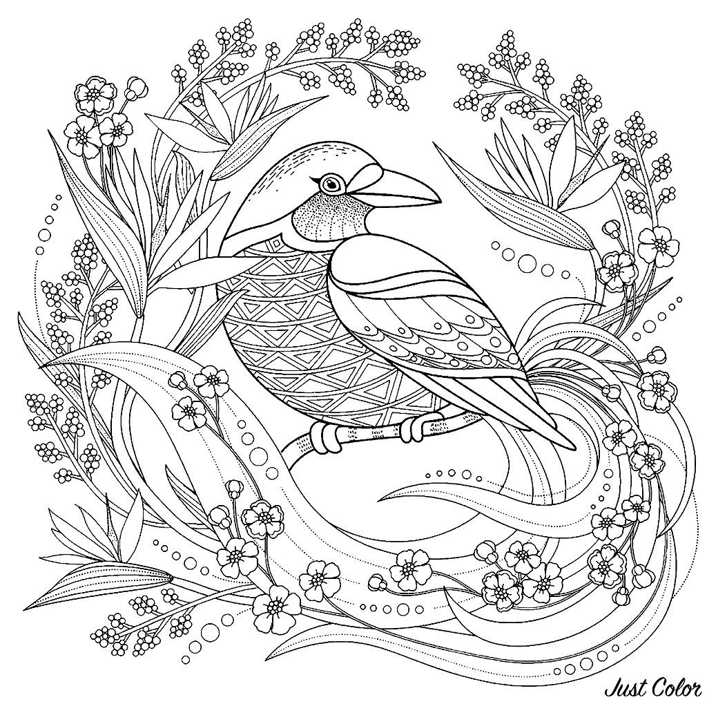 Oiseau avec elements floraux - Oiseaux - Coloriages difficiles pour adultes