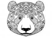 Coloriages Ours