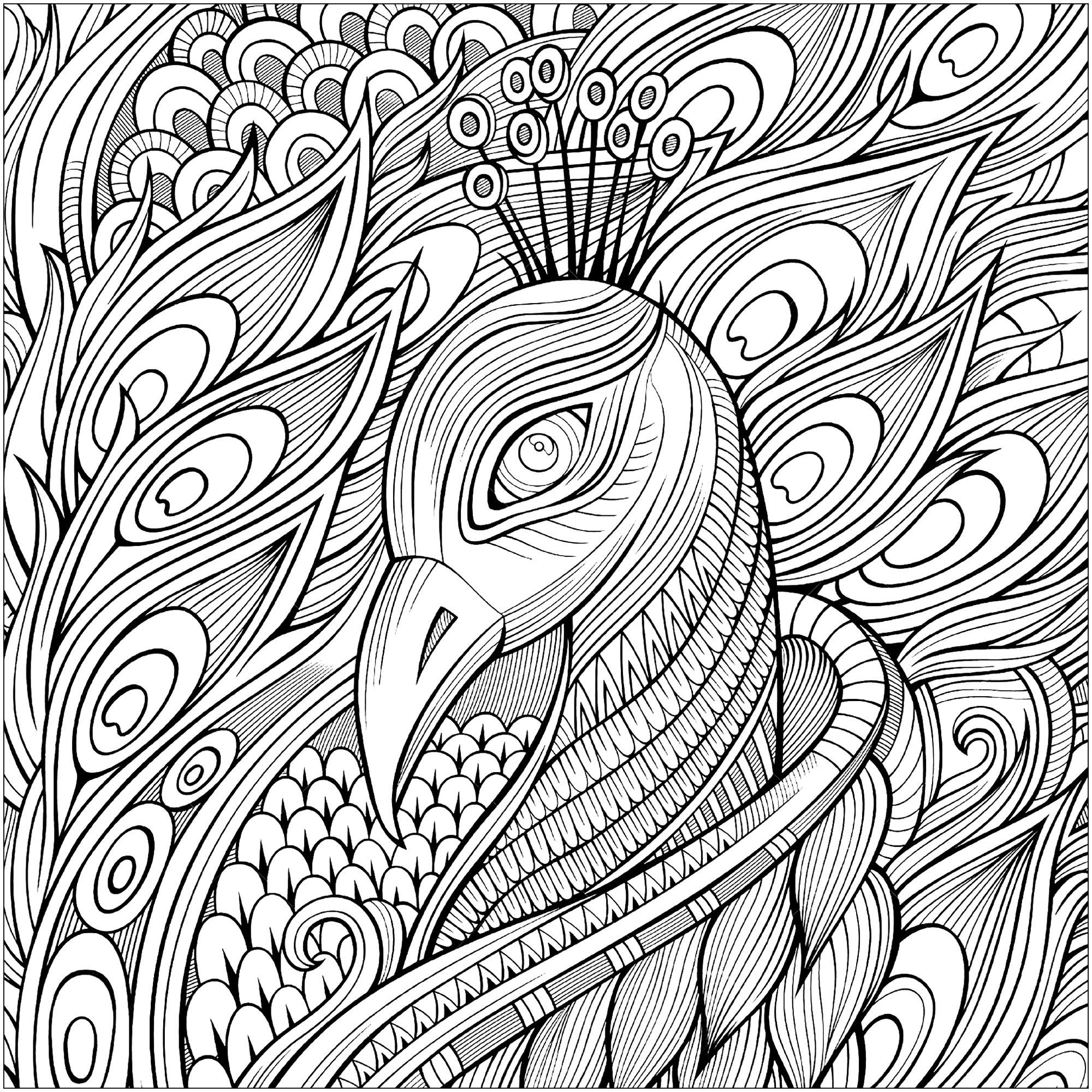 Élégant paon et ses plumes bleues - Paons - Coloriages difficiles pour adultes
