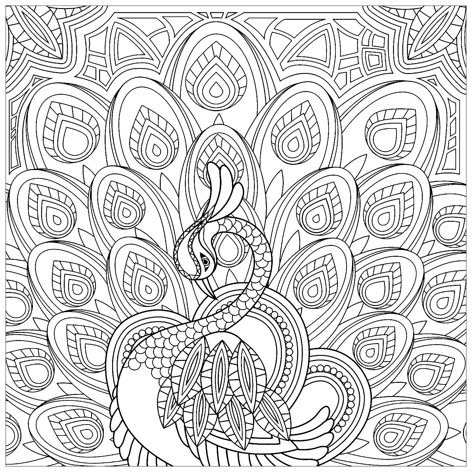 Joli coloriage de paon carré, totalement rempli de motifs à colorier