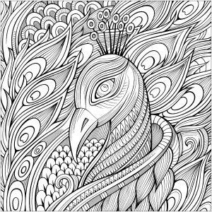 Élégant paon et ses plumes bleues