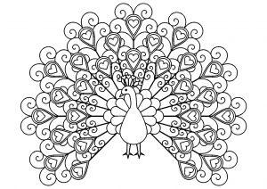 Paon avec plumes comportant des coeurs