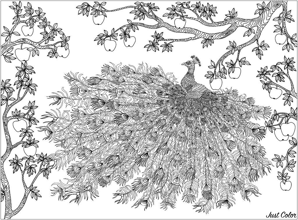 Pommier surplombant un paon et son merveilleux plumage