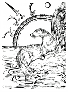 Coloriage adulte loutre