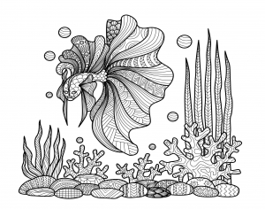 Coloriage poisson sur corails bimdeedee
