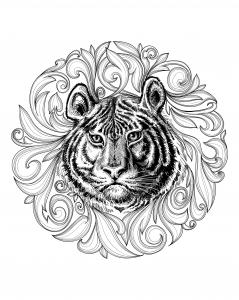 Coloriage adulte tigre cadre feuillu